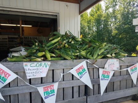 new-jersey-white-corn