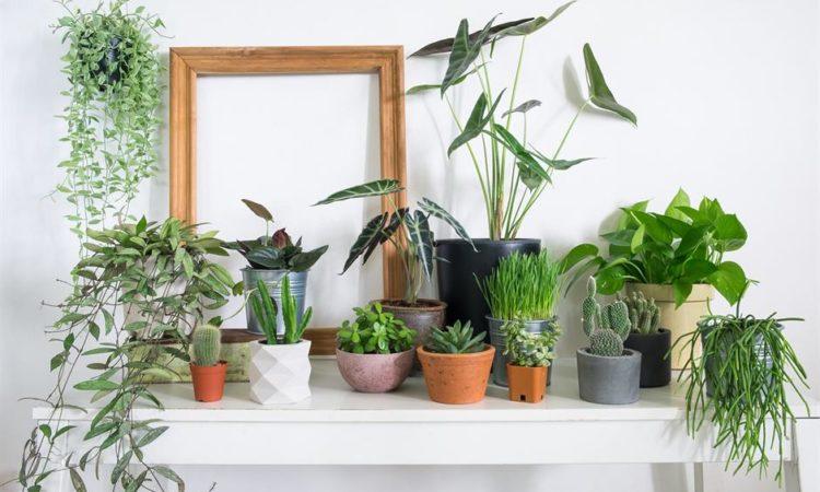 best-indoor-plants-
