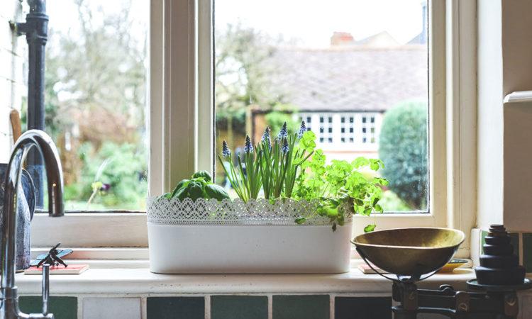 herb-garden-kitchen-window
