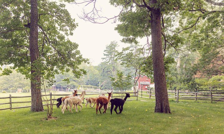 Dogwood Hills Farm